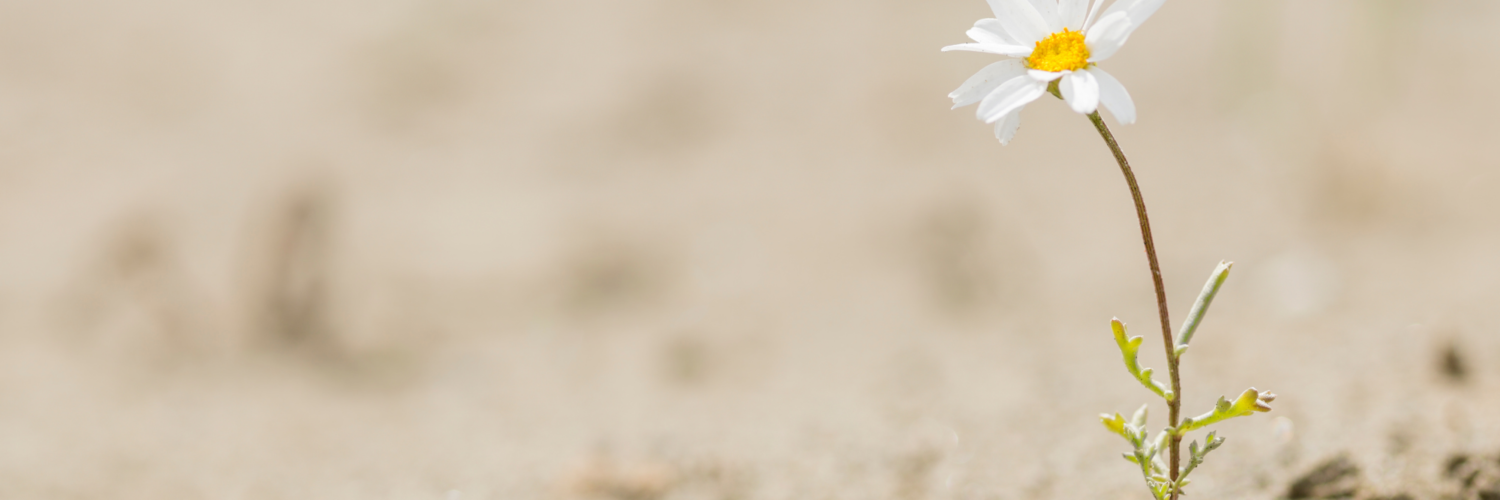 A single flower growing in sand/scrubland symbolising resilience
